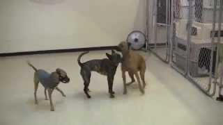 Harmony Of The Dogs' Dance