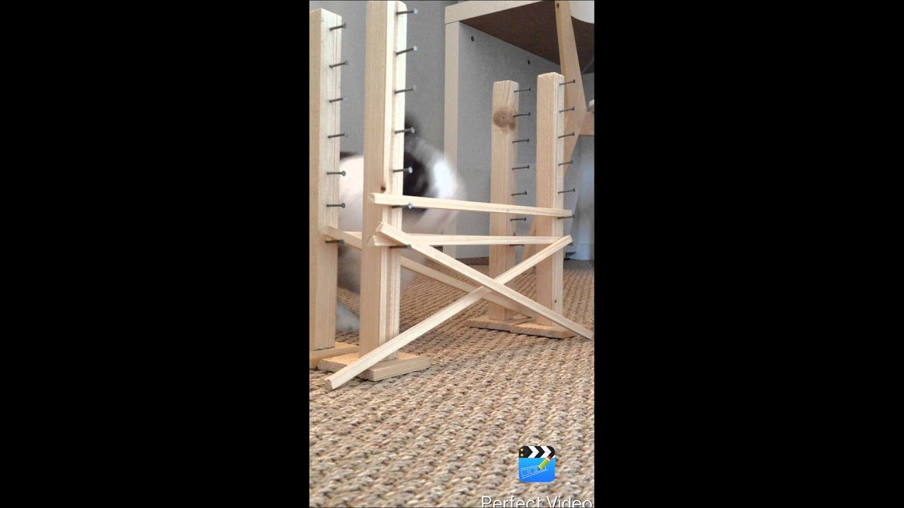 Saut d'obstacle lapin - Boubou - YouTube
