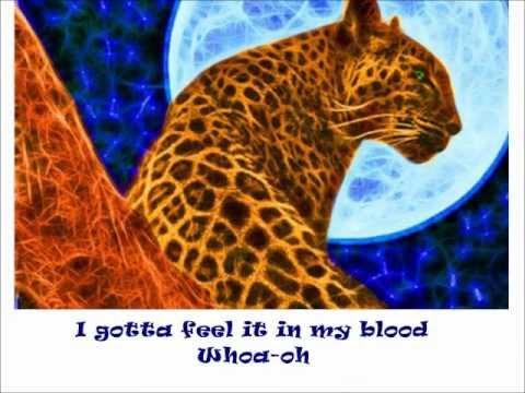 Animal DEF LEPPARD (lyrics)