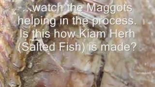 Salted Fish - Drying & Processing Thumbnail