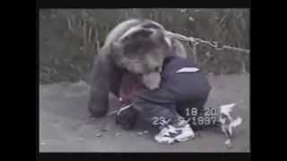 Борьба с медведем - медведь на туше / Wrestling with a bear - bear put on touch