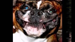 Фото веселых  собак