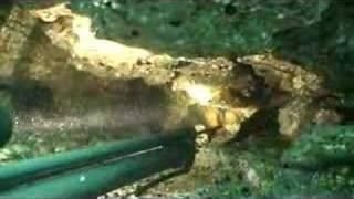Campeón Mundial Pesca Submarina. Patricio Saez. Parte1