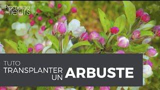 Transplanter un arbuste, une vidéo jardin, pas à pas