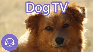Dog TV - Virtual Beach Walk for Dogs - Dog Entertainment Video 2021