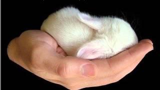 LAGU ROHANI : HIDUPKU ADA DITANGANMU (MY LIFE IS IN YOUR HAND)