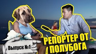 Репортер от полубога #1 - СКРИПТОНИТ поет про собак   Какая собака станет Акимом?
