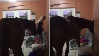 Roommates Transform Home Into Horse Shelter During Hurricane Irma