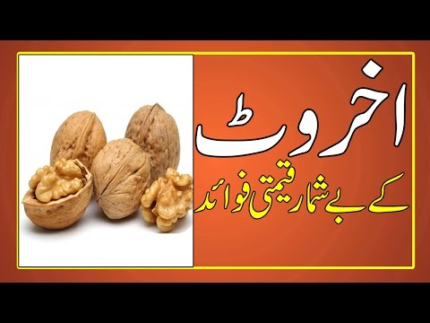 Akhrot Ke Fawaid | Health Benefits Of Walnuts in Urdu / Hindi