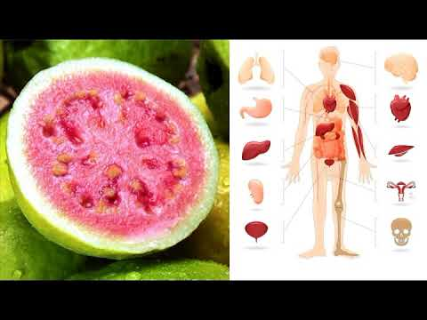 amazing-guava-fruit-and-guava-leaves-health-benefits