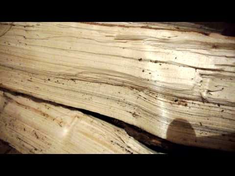 Woodworm in splitted firewood
