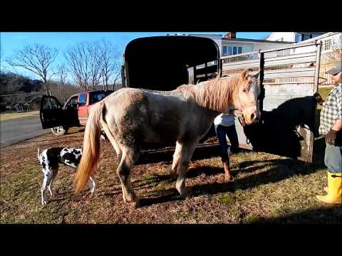 Heart of Phoenix Equine Rescue - Tragic neglect of Ohio Miniature horses