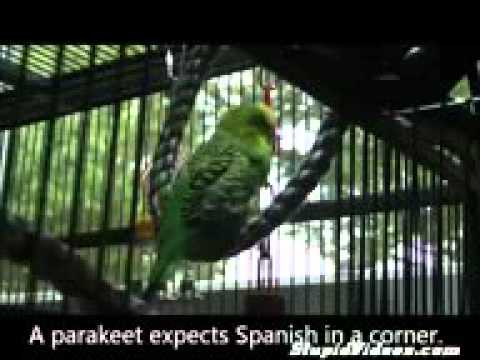 funny news funny news funny movies 2013 Parrot Tries to Quote Monty Python Funny animals, comedy, do