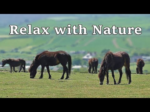 Music for Dogs : Calming TV for Dogs : Relax Your Dog TV
