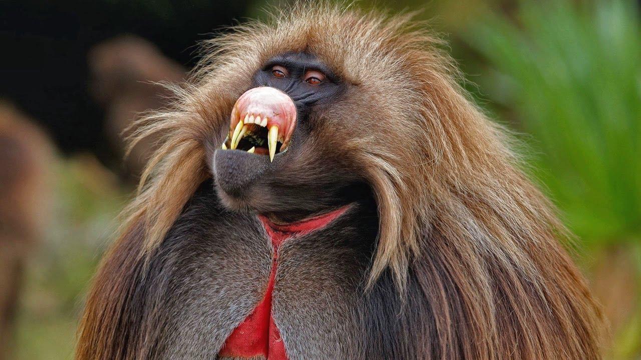 Самые необычные виды обезьян на планете