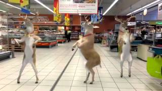 Tańczące renifery w supermarkecie