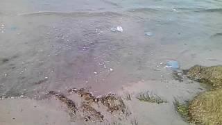 Анапа медузы в сентябре чёрное море(Laguna2005 ирина., 2016-09-30T17:53:37.000Z)