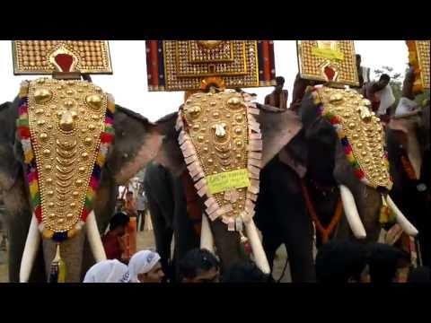 Elephant in festival
