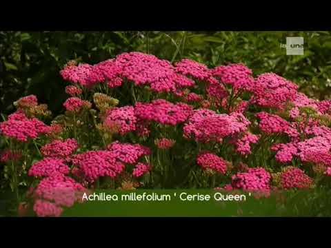 Voir le jardin  de Béné dans jardin et loisirs