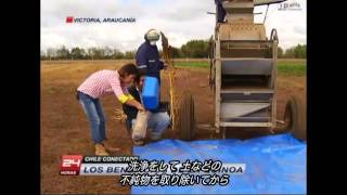 (日本語字幕)〔チリ〕キヌアの保存・研究・品種改良 | Chile Conectado  Los Beneficios de la Quinoa
