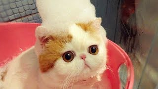 Cute (and weird) facts about Cats #1