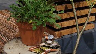 Gardening for Renters | Amanda Moon | Central Texas Gardener