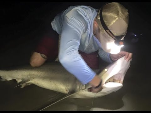 Shark Fishing In The Outer Banks North Carolina Youtube