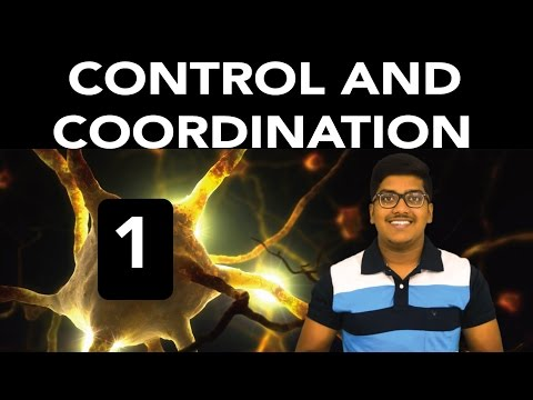 Biology: Control and Coordination (Part 1) thumbnail