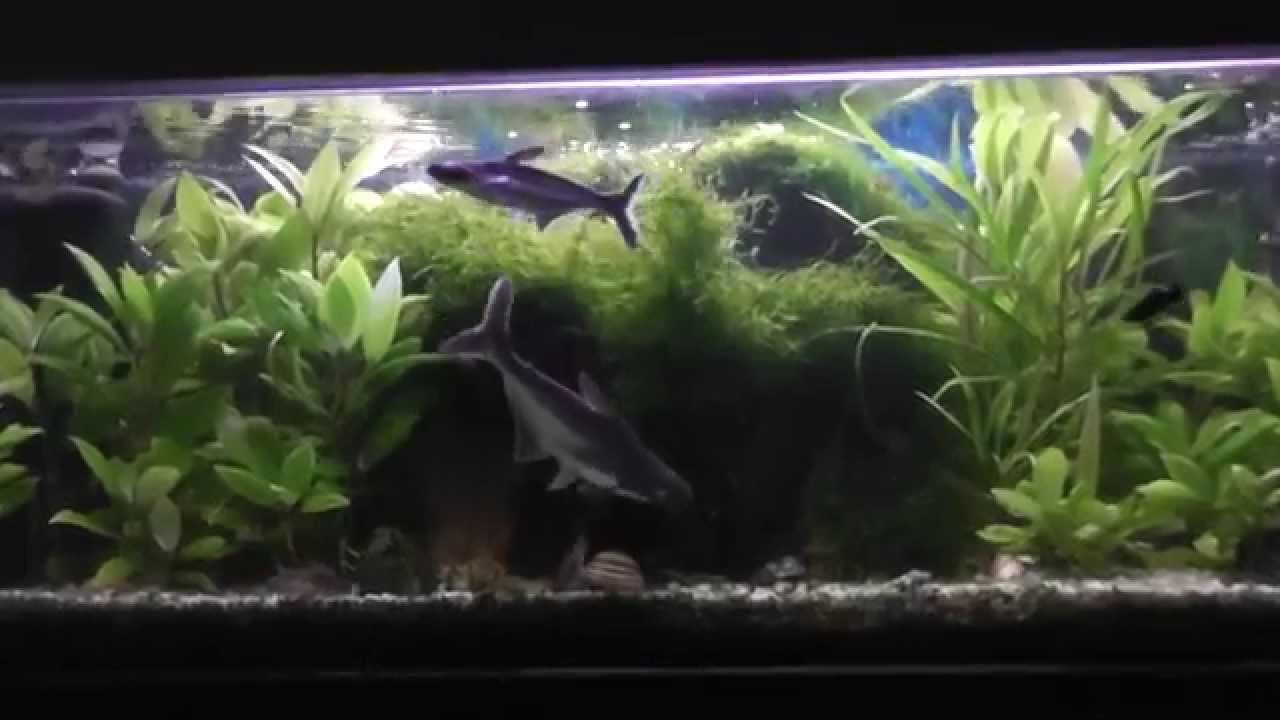 Aquarium Aquascape Freshwater Planted Tank Relax 2014 HD ...