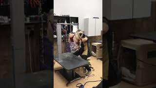 Pug nail clipping