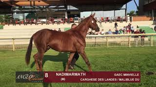 Show Anglo 2018 : Lot 8 - NADIMARMATH
