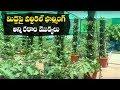 How to Make Vertical Garden || Terrace Gardening Ideas || Vertical Terrace || SumanTV Organic Foods