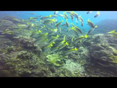 The Dive Company 5 -7 June 2015 Tioman Trip