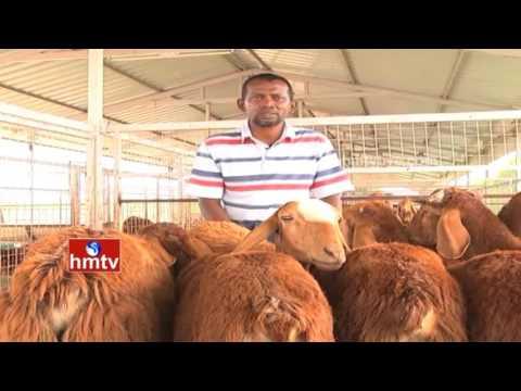 Sheep Farming Ideal Farmer Sk Abdullah Tips | Kadapa | Nela Talli | HMTV