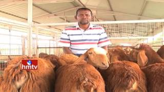 Sheep Farming Ideal Farmer Sk Abdullah Tips | Kadapa | Nela Talli | HMTV