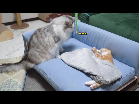 Cat Worries About His Younger Sibling
