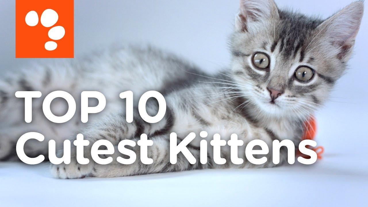 Top 10 Cutest Kittens