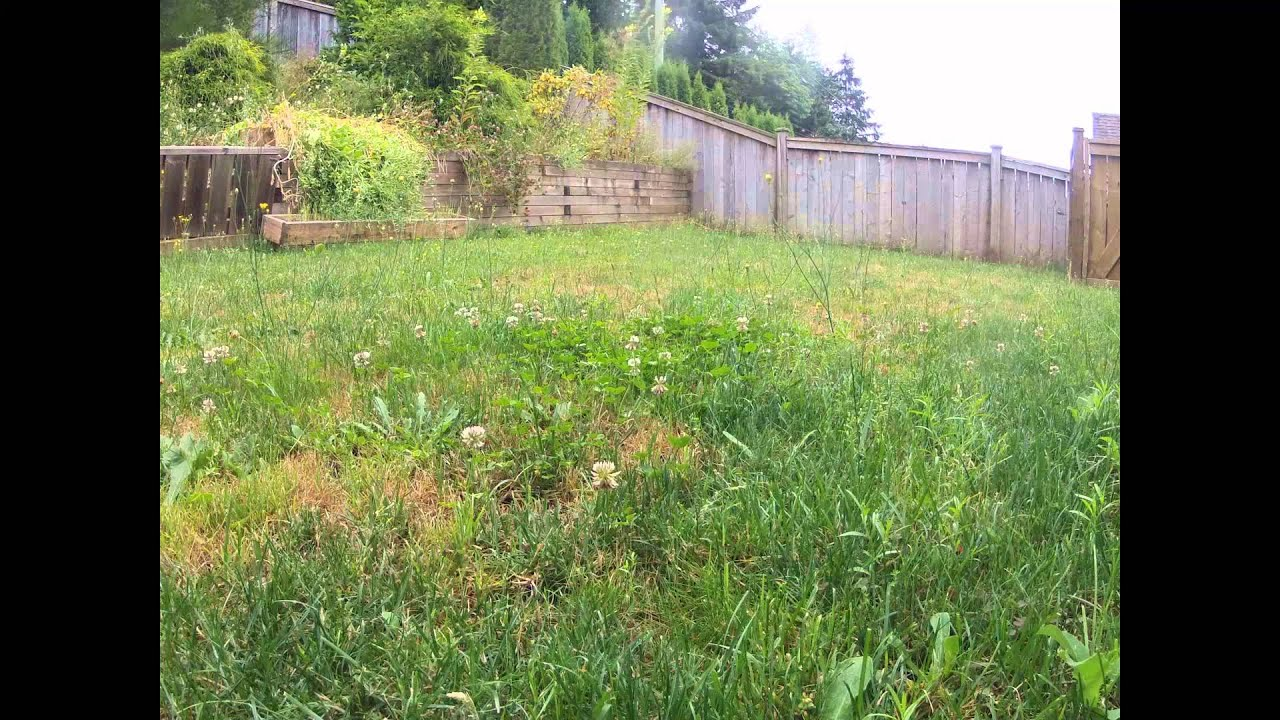24 hour timelapse of grass weeds in yard youtube