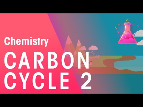 What Is The Carbon Cycle - Part 2   Chemistry for All   FuseSchool