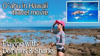[Oahu, Hawaii tour movie]feat. dolphins, sharks - 하와이 여행 뮤비[오하우 편]반함주의!!
