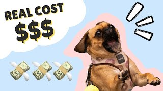 REAL COST OF OWNING A DOG || Small Dog Breeds