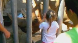 Toddler Recovering After Falling Into Zoo's Rhino Exhibit