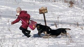 Нападение собак Зоошиза Собака бывает кусачей