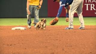 What Could Go Wrong In This Wiener Dog Race? A Wiener On The Loose