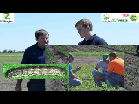 Growing Point Agronomy™- Pioneer - Early Season Corn Pests - Cutworm