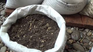 Membuat media semai budidaya cabe rawit putih gendut organik dalam karung