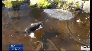 Кіт влаштував полювання за рибою на замерзлому ставі
