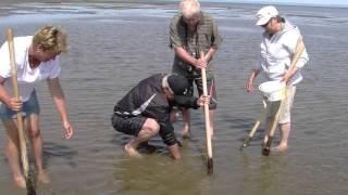 Pêche aux coques 2015- Plage Bas-Caraquet, NB