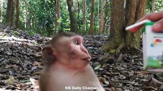 Download Video Amazing Lady give the milk to the baby monkey How the baby monkey drink MP3 3GP MP4
