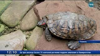 Не выбрасывайте черепах!